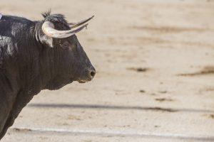 5 tips to enjoy bullfighting in Madrid