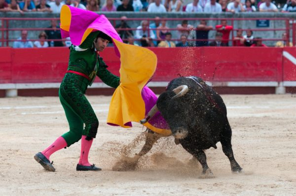 What is a bullfighter called?